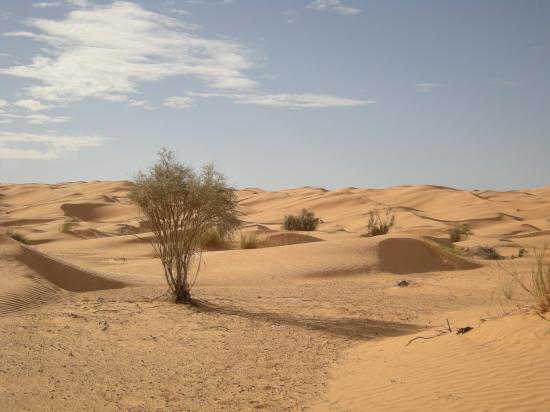 Stage désert tunisien