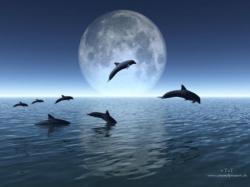 dauphins- ouvert.jpg