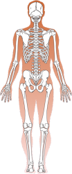 articulations-20arthrose-1-2.png