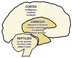 Cerveau stress 1