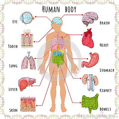 Dmographique mdical de corps humain 40174914