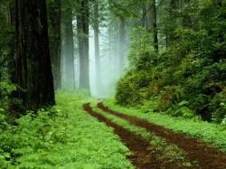 fond-ecran-chemin-forestier.jpg