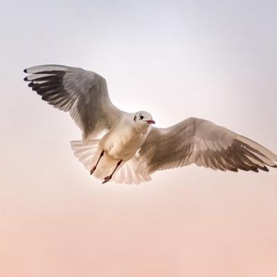 Seagull 3465550 340